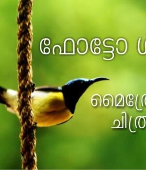 മൈത്രേയൻ രാഹുൽ ജോർജ്ജ് ഫോട്ടോഗ്രഫി ഫോട്ടോഗാലറി ഛായാഗ്രാഹണം നിശ്ചലച്ഛായാഗ്രഹണം